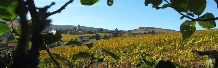Vignoble cru Saint-Véran